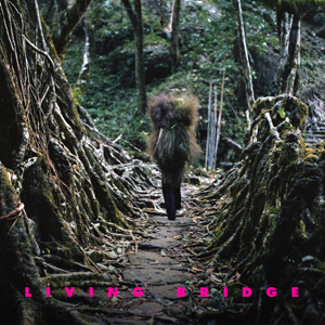 Rare Book Room Records' first release, Living Bridge, compiled unique recordings made at Rare Book Room Studios by Avey Tare, Telepathe, Samara Lubelski, Silver Dice and many more.